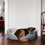 Image of a dog in its bed, on wooden flooring